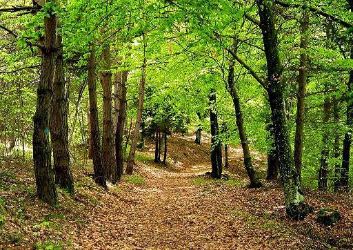 boschi urbani
